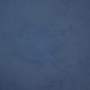 Poissons » Raie » Neotrygon kuhlii