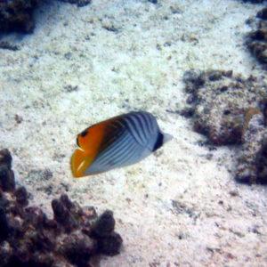 Nouvelle-Calédonie, Lifou, Baie de Jinek