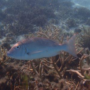 Bossu - Nouvelle-Calédonie, Île des Pins, Piscine naturelle d'Oro