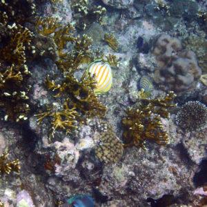 Nouvelle-Calédonie, Bourail, Grottes de l'Île Verte