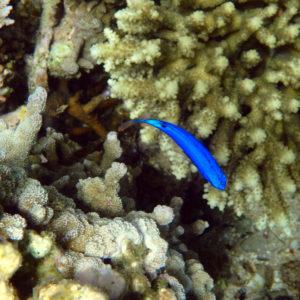Nouvelle-Calédonie, Nouméa, Côte Blanche
