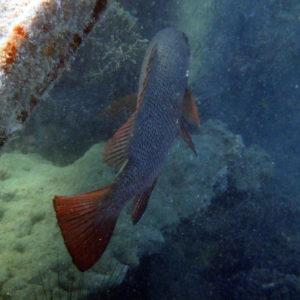 Crinoïde - Nouvelle-Calédonie, Nouméa, Baie des Citrons