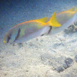 Nouvelle-Calédonie, Nouméa, Baie des Citrons
