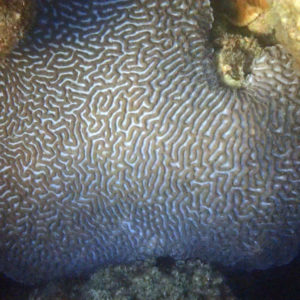 Cnidaires - Nouvelle-Calédonie, Nouméa, Baie des Citrons