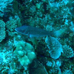 Bossu - Nouvelle-Calédonie, Nouméa, Passe de Dumbéa, Spot des surfeurs