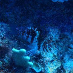 Nouvelle-Calédonie, Nouméa, Passe de Dumbéa, Spot des surfeurs