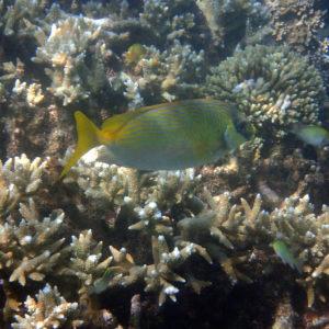 Nouvelle-Calédonie, Nouméa, Le Ponton, récif Tamanou