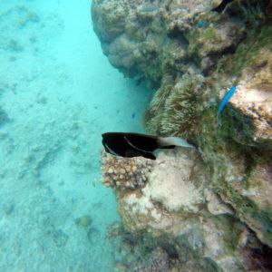 Nouvelle-Calédonie, Île des Pins, Piscine naturelle d'Oro