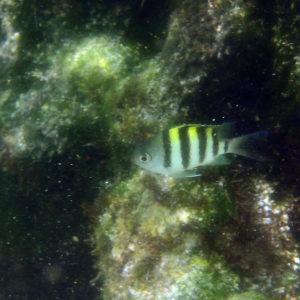 Nouvelle-Calédonie, Île des Pins, Baie D'Oro, Île des Pins