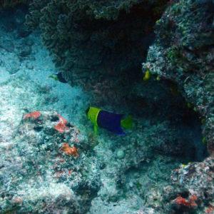 Nouvelle-Calédonie, Île des Pins, Jardin d'Eden