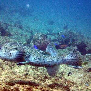 Nouvelle-Calédonie, Passe de Boulari, Manta Point