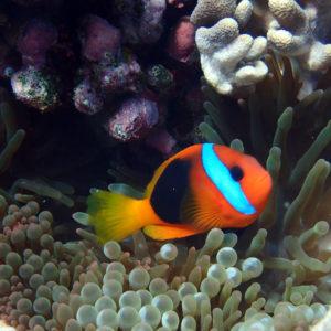 Nouvelle-Calédonie, Hienghène, Pointe aux cachalots