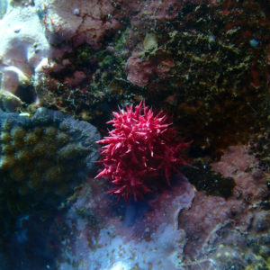 Cnidaires - Nouvelle-Calédonie, Hienghène, Pointe aux cachalots
