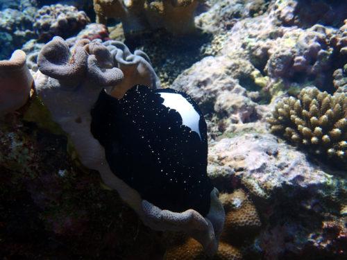 La photo du jour : 30 mai 2020 – Ovula ovum