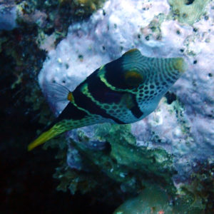 Nouvelle-Calédonie, Nouméa, Le sournois