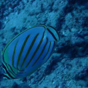 USA, Hawaii, Oahu, Horseshoe Reef