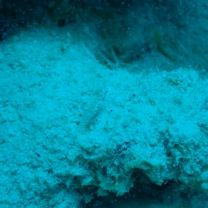 Poissons osseux - Nouvelle-Calédonie, Passe de Boulari, Manta Point