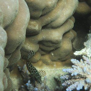 Nouvelle-Calédonie, Nouméa, Île aux Canards