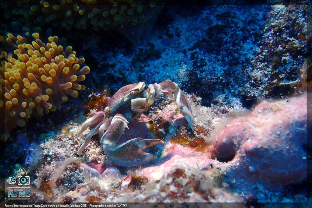 crabe filtreur