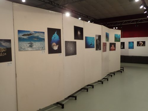 exposition de photos du festival