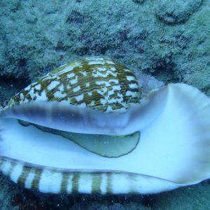 Mollusques