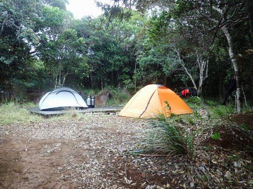 2 tentes au milieu de la forêt