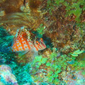 Nouvelle-Calédonie, Bourail, Fausse passe de l'Île Verte