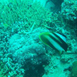 Nouvelle-Calédonie, Nouméa, Sèche croissant