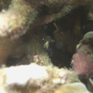 Crustacés » Crevettes