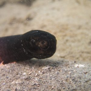 Serpent marin