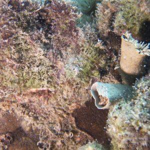 Organismes vermiformes » Annélide » Ver tubicole