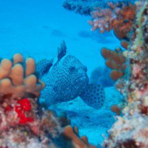 Nouvelle-Calédonie, Parc naturel de la Mer de Corail, Récifs d'Entrecasteaux, Atoll Surprise