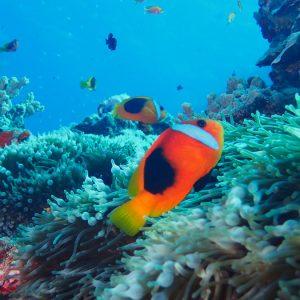 Nouvelle-Calédonie, Parc naturel de la Mer de Corail, Récifs d'Entrecasteaux, Atoll Huon