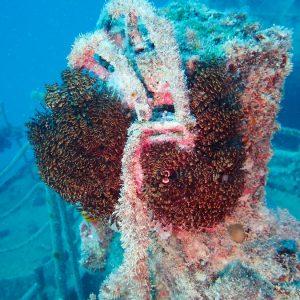 Organismes vermiformes » Annélide » Ver tubicole » Sabellastarte sp.