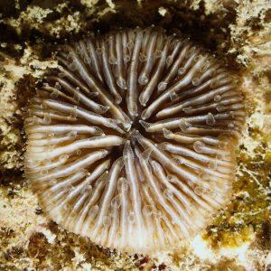 Cnidaires - Nouvelle-Calédonie, Nouméa, Épave du Toho 2