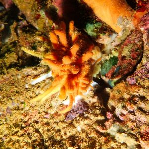 Mollusques » Bivalves
