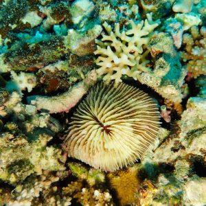 Cnidaires - Nouvelle-Calédonie, Nouméa, Sèche croissant