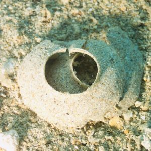 Mollusques » Gastéropode