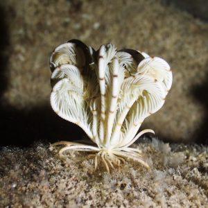Crinoïde - Nouvelle-Calédonie, Nouméa, Rocher à la voile