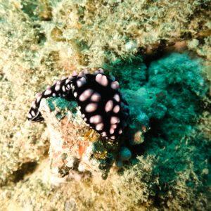 Nouvelle-Calédonie, Nouméa, Récif Tamanou