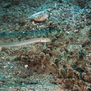 Poissons osseux - Nouvelle-Calédonie, Nouméa, Rocher à la voile