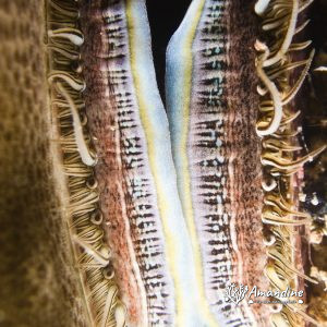 Mollusques » Bivalve