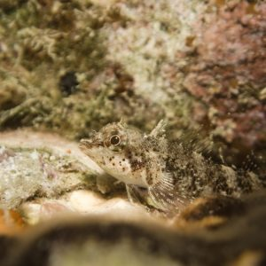 Poisson à trois nageoires - Nouvelle-Calédonie, Nouméa, Rocher à la voile