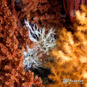 Organismes vermiformes