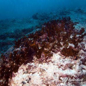Cnidaires - Wallis-et-Futuna, Wallis, Tombant de la passe