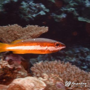 Poissons osseux - Wallis-et-Futuna, Wallis, La grotte