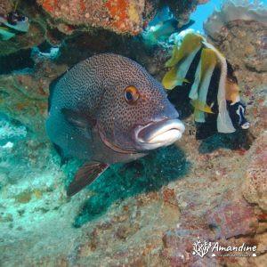 Castex et grosses lèvres - Nouvelle-Calédonie, Passe de Boulari, Passe extérieure de Boulari