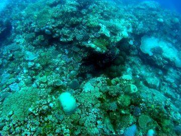 Plongée le 26 février 2017 à l'îlot Ténia