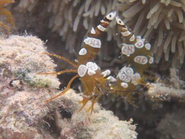 Double plongée le 25 janvier 2020 à la Baie des Citrons