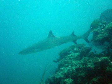 Plongée le 3 février 2018 au Jardin d'Eden à l'Île des Pins